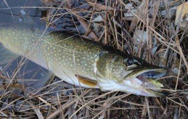 Рыбалка на приазовских лиманах перед новым годом