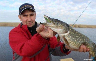 Трудовая рыбалка перед нерестом.