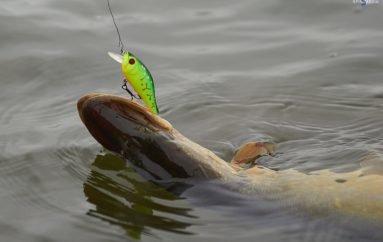 Зимняя рыбалка на лиманах Приазовья