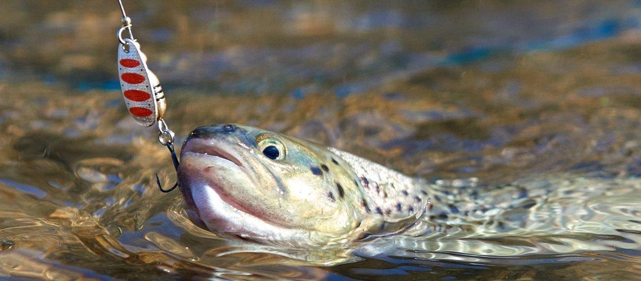 Тренировка на реке Сочи